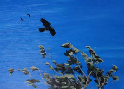 Rooks on a windy day - 1